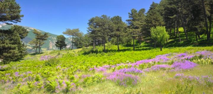 Yeniceşıhlar Köyü – Samsaçavuş Parkuru: 14 km