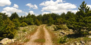 Avudan Yolu: 20 km