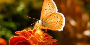 İda'nın Büyülü Canlıları -35