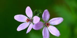 İda'nın Çiçekleri -39