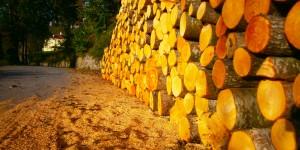 Kışı Bekleyen Odunlar