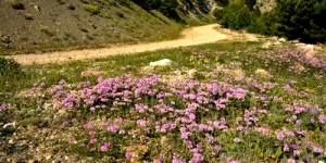 Yeniceşıhlar – Semetler – Samsaçavuş Parkuru: 15 km