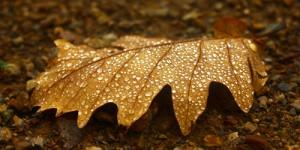 30 Kasım / Ağaçlardan Suyun Çekilmesi, Ülker Fırtınası