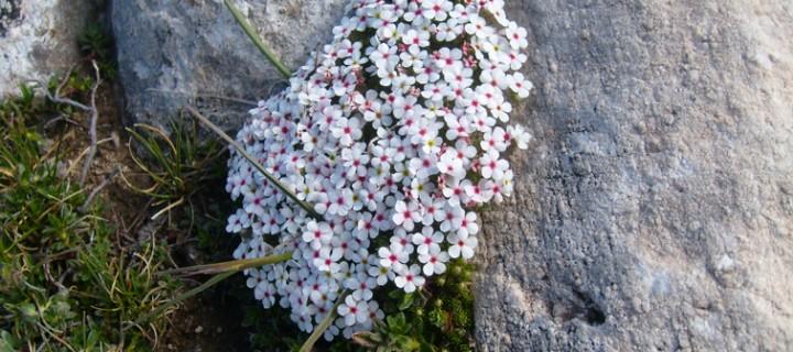 Uludağ'ın Bitki Çeşitliliği