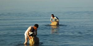 Van Gölü'nde Koyun Yıkama