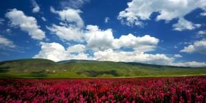 Büyük Ağrı ve Çiçek Tarlası