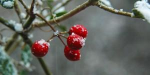Kar ve Kırmızı