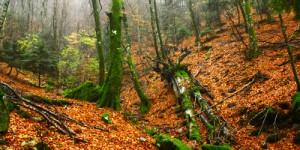 8 Aralık / Karakış Fırtınası, Yaprak Dökümü Sonları