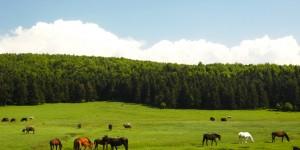 Kızılağıl Köyü – At Yaylası Doğal Bisiklet Parkuru