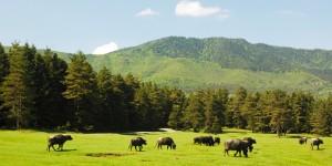 At Yaylası – Elmalık Köyü Doğal Bisiklet Parkuru