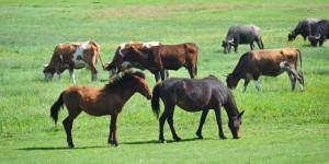 At Yaylası – Orman Yolu – Elmalık Köyü