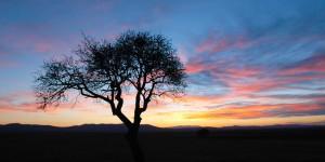 Ağaç, Akşam ve İç Ege'de Güne Veda