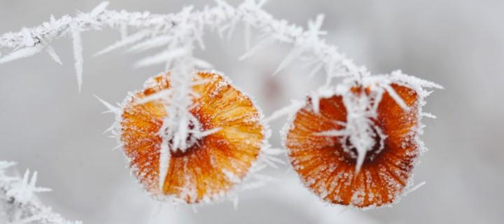 Seben'de Sisli Bir Kış Günü -9