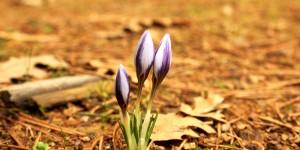 İda'nın Çiçekleri -44