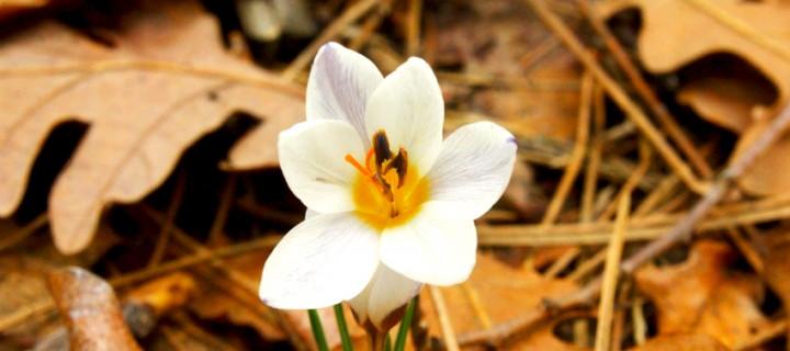 İda'nın Çiçekleri -43