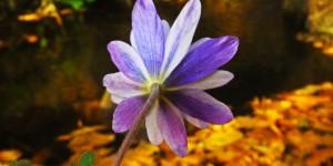 İda'nın Çiçekleri -49