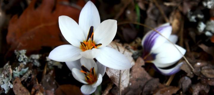 İda'nın Çiçekleri -51