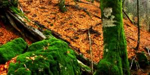 İda Ormanlarının Renkleri