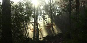 İda'da Ormana Sızan Güneş