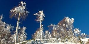 Samanlı Dağları, Kar ve Ağaçlar