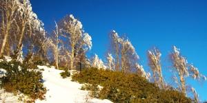 Samanlı'nın Karları