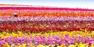Çiçeğin Kentinden Şiir Gibi Festival