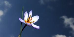 İda'nın Çiçekleri -87