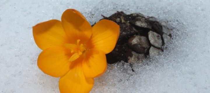 İda'nın Çiçekleri -53