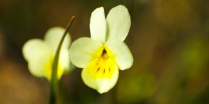 İda'nın Çiçekleri -65
