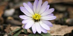 İda'nın Çiçekleri -67