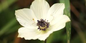 İda'nın Çiçekleri -69
