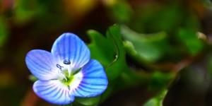 İda'nın Çiçekleri -71