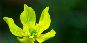 İda'nın Çiçekleri -77