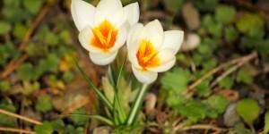 İda'nın Çiçekleri -58