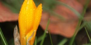 İda'nın Çiçekleri -60