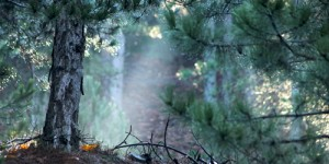 2 Mart / Ağaçlara Su Yürüme Zamanı