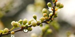 18 Mart / Kocakarı Soğuklarının Sonu, Kırlangıç Fırtınası