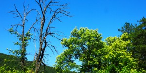 30 Mart / Ağaçların Yeşermeye Başlaması