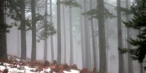 14 Mart / Kocakarı Fırtınası