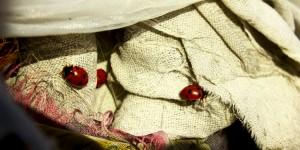 İda'nın Uğurböcekleri -4