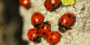 İda'nın Uğurböcekleri -9