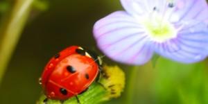İda'nın Uğurböcekleri -13