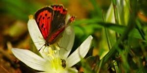İda'nın Kelebekleri -1