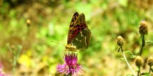 İda'nın Kelebekleri -2
