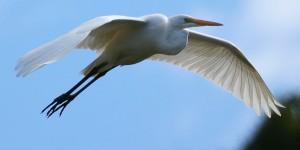 Göçmen Kuşlar Doğu'ya İlkbaharı Getirdi