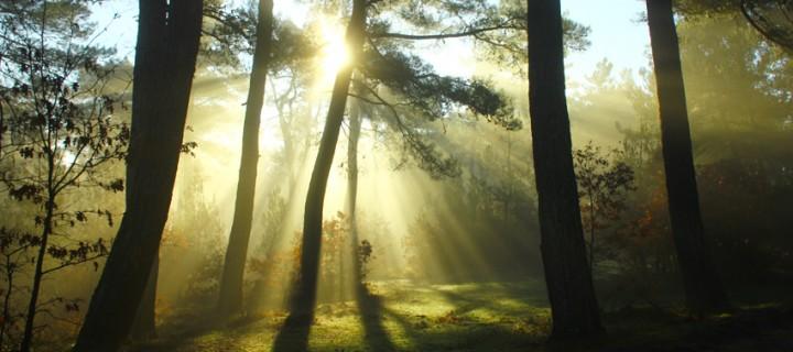 Ormana Yansıyan Işık