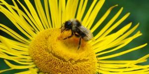 26 Nisan / Arıların Doğurma Zamanı. Gül Ağaçlarının Bakım Zamanı. Fırtına