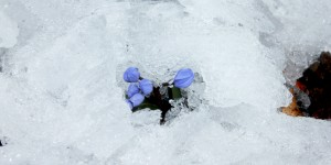 İda'nın Çiçekleri -88