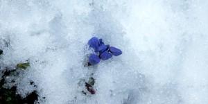 İda'nın Çiçekleri -91