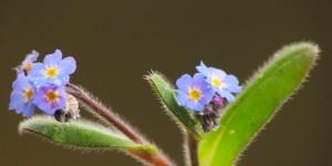 İda'nın Çiçekleri -93